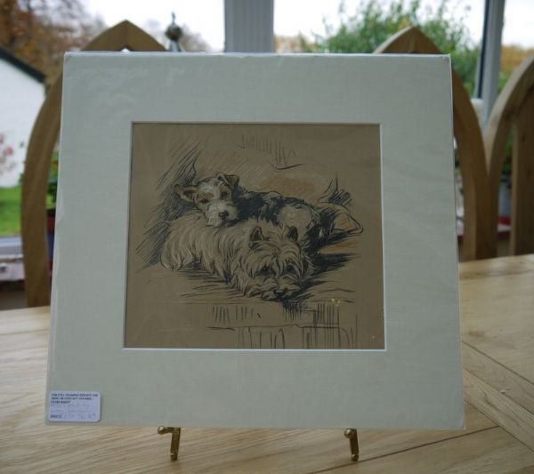 Two Coloured Terriers curled up together  - Ter D9 - 1940's print by Lucy Dawson
